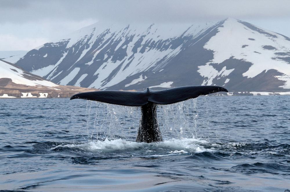 whales crypto - Киты играют по-крупному